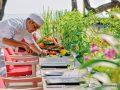 Kanuhura-Chefs-Herb-Garden-restaurant--43-